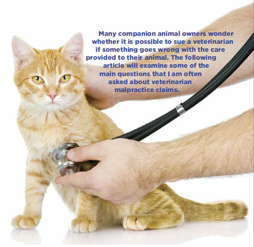 how to make a complaint against a veterinarian