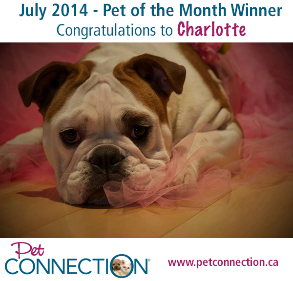 Pet-of-the_Month_Winner-Charlotte