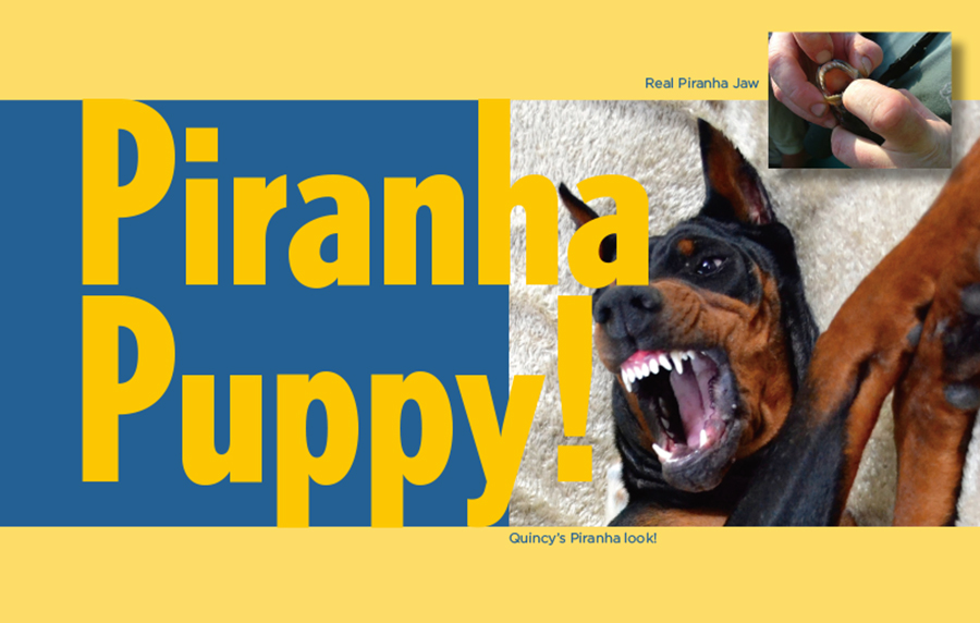 PiranhaPuppy
