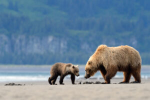 bear canstockphoto21007677
