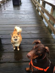 jack-and-bff