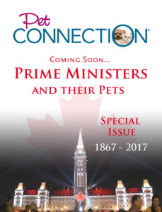 pet-connection-mock-up-cover