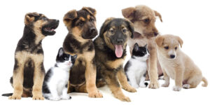 puppy_group