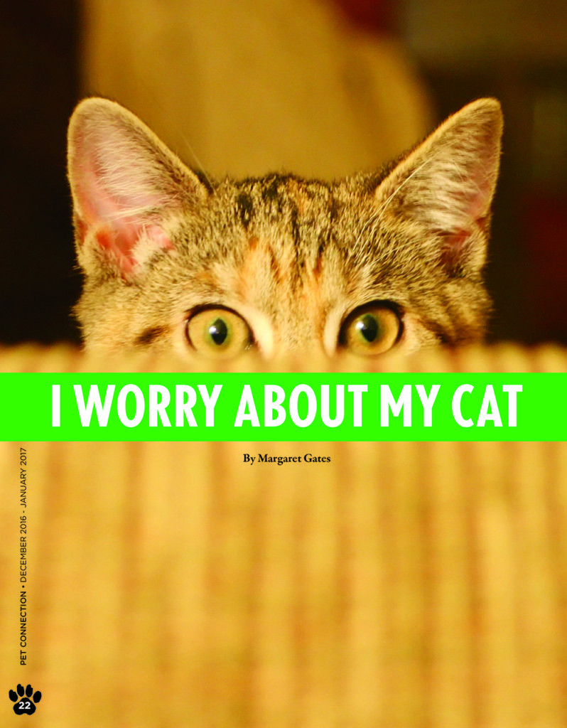 my_cat_worries