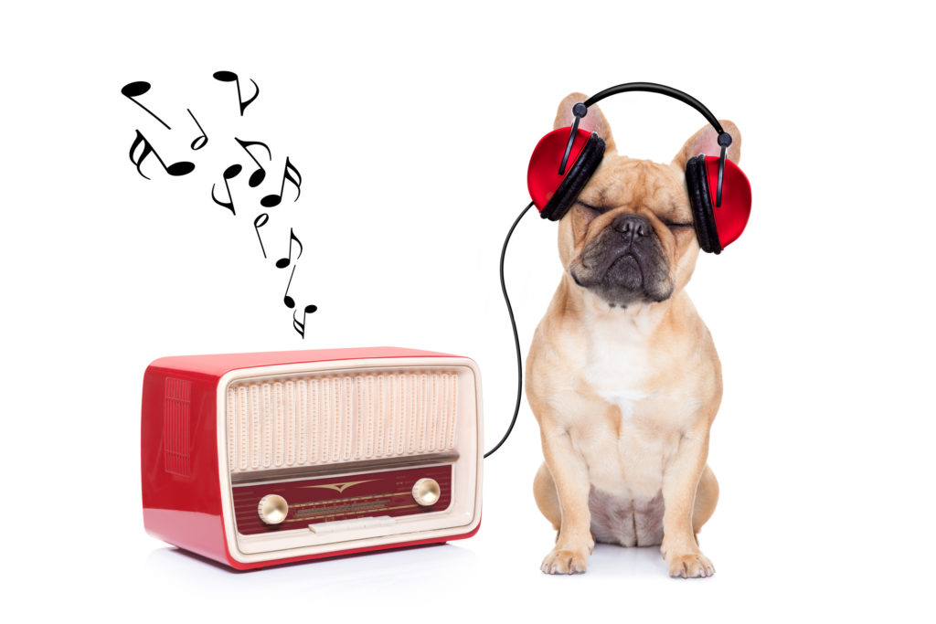 Dog with radio
