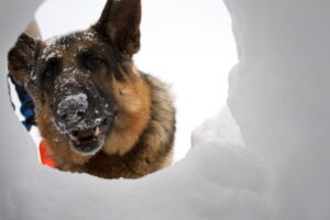 Avalanche Dog