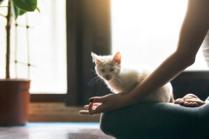 Cat meditating - for REd Dog